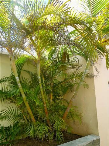 บ้าน,รับสร้างบ้าน,แบบบ้าน,เคล็ดลับ,รั้วต้นไม้,ปลูกต้นไม้ทำรั้ว,รั้ว,ไม้บังสายตา,ไม้บังแแดด